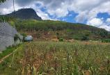 Đất nghỉ dưỡng ở Định An, Hiệp An, 3900m2, 600m2 thổ, giá chỉ 12.5 tỷ