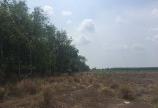 Bán Đất Sào Gần khu công nghiệp Tân Khai II