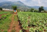 Cần bán đất nông nghiệp 3000m2 ở Trung Hiệp, Hiệp An, bê tông 3.5m, Cách QL20 500m.