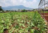 Cần bán đất nông nghiệp 3000m2 ở Hiệp An, Hẻm ô tô, giá chỉ 4,5 tỷ