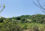 Bán đất cao phong 6000m 725m thổ cư view thoáng đẹp