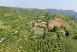 Mảnh đất giá trị vàng tại Mộc Châu 0822356688
