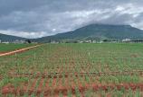 5160m2 đất nông nghiệp 2 MT đường ở Quảng Hiệp, Hẻm Trên Trường Chu Văn An, Cách QL20 500m