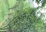 Cần tim người muốn sở hữu lô đất trồng cây ăn cao phong Hb